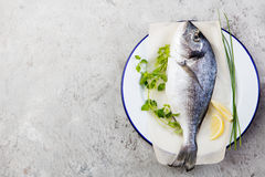 Fresh raw fish, dorado on a plate with herbs and slices of lemon. Grey stone background. Top view. Fresh raw fish, dorado on a plate with herbs and slices of Royalty Free Stock Image