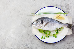 Fresh raw fish, dorado on a plate with herbs and slices of lemon. Grey stone background. Top view. Fresh raw fish, dorado on a plate with herbs and slices of Stock Images