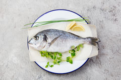 Fresh raw fish, dorado on a plate with herbs and slices of lemon. Grey stone background. Top view. Fresh raw fish, dorado on a plate with herbs and slices of Stock Photos