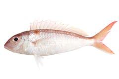 Fresh raw fish. Es on white plate Stock Photo