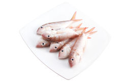 Fresh raw fish. Es on white plate Stock Photography