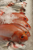 Fresh raw fish on fishmonger's slab Stock Photos