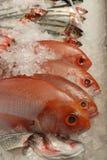 Fresh raw fish on fishmonger's slab. Freshly caught red mullet (goat fish) bream and herring on ice on fishmonger's slab Stock Photos