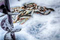 Fresh raw fish. Fishing nature lake winter fishing Stock Photos