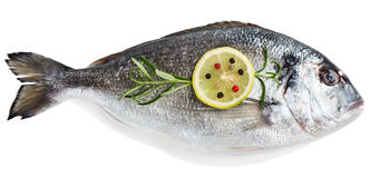Fresh raw fish gilthead bream. Top view of one fresh dorada fish decorated with lemon, pepper and rosemary isolated over the white background Stock Images