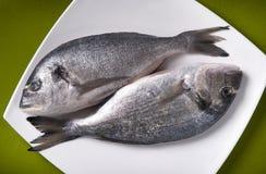 Fresh raw fish Royalty Free Stock Photos