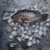 Fresh raw fish on ice cubes on grey. Top view of fresh raw fish on ice cubes on grey Stock Images
