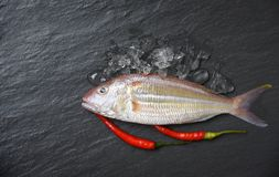 Fresh raw fish on ice dark background Seafood fish ocean gourmet for cook with red chilli in the restaurant royalty free stock photos