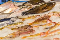 Fresh raw fish on ice. Fresh fish on ice at the fishmarket, Greece Skiathos, September 2018 stock photos