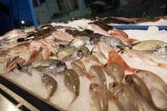 Fresh raw fish on ice. Fresh fish on ice at the fishmarket, Greece Skiathos, September 2018 stock photography