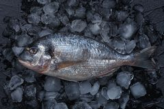 Fresh raw fish on ice. Top view stock photography