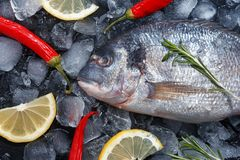 Fresh raw fish on ice. Top view royalty free stock photography