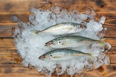 Fresh raw fish on ice on a wooden table. Fresh raw fish on ice on a wooden table Stock Photography