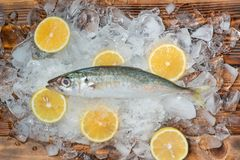 Fresh raw fish on ice on a wooden table. Fresh raw fish on ice on a wooden table Royalty Free Stock Image