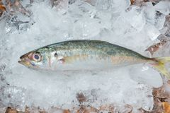 Fresh raw fish on ice on a wooden table. Fresh raw fish on ice on a wooden table Royalty Free Stock Images