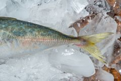 Fresh raw fish on ice on a wooden table. Fresh raw fish on ice on a wooden table Stock Image