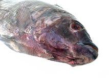 Fresh raw fish isolated on white background Stock Photography