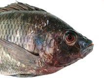 Fresh raw fish isolated on white background Stock Image