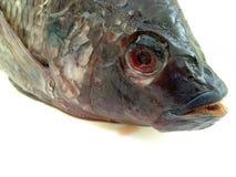 Fresh raw fish isolated on white background Stock Photo