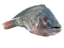 Fresh raw fish isolated on white background Royalty Free Stock Photos