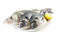 Fresh raw fish and lemon. Fresh raw fish Dorada, sea bass and lemon Stock Images
