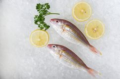 Fresh raw fish and lemon ice background in the seafood supermarket stock image