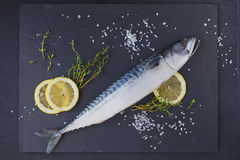 Fresh raw fish mackerel and ingredients for cooking on a dark ba Stock Photos