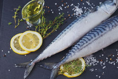 Fresh raw fish mackerel and ingredients for cooking on a dark ba Royalty Free Stock Photos