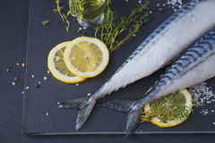 Fresh raw fish mackerel and ingredients for cooking on a dark ba Stock Images