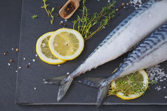 Fresh raw fish mackerel and ingredients for cooking on a dark ba Stock Image