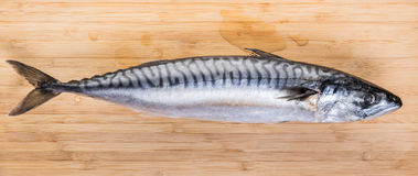 Fresh raw fish mackerel. On a wooden background Stock Photos