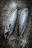 Fresh raw fish mackerel on a wooden table. Rustic style.  Stock Photos