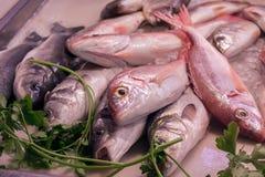 Fresh raw fish at the market. Close up of fresh raw fish at the market Stock Image