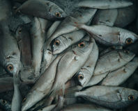 Fresh raw fish in market. Raw food Royalty Free Stock Photo