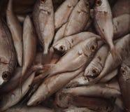 Fresh raw fish in market. Food background Stock Photo