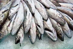 Fresh raw fish in the market. Fresh raw Mackerel fish in the market Stock Image