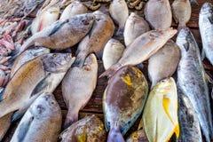 Fresh raw fish at market. Fresh raw sea fish at market in Asia near fishermen village Stock Images