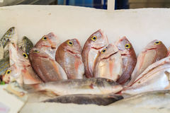 Fresh raw fish at market. Fresh raw sea fish at market in Asia near fishermen village Royalty Free Stock Photo