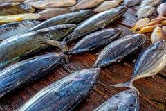 Fresh raw fish at market. Fresh raw sea fish at market in Asia near fishermen village Stock Image