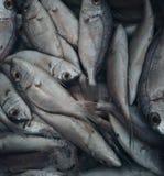 Fresh raw fish in market. Sea food Stock Photo