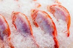 Fresh raw fish at market. Fresh raw sea fish in ice at market in Asia near fishermen village Stock Photography
