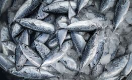 Fresh raw of fish in the market. Fresh fish in street market, Fresh raw of fish in the market Stock Photos