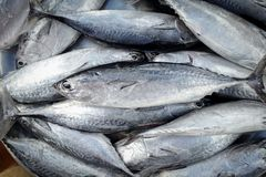 Fresh raw of fish in the market. Fresh fish in street market, Fresh raw of fish in the market Royalty Free Stock Photo