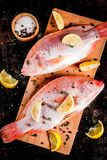 Fresh raw fish pink tilapia. With spices for cooking - lemon, salt, pepper, herbs, on  black rusty metal table, copy space top view Stock Images