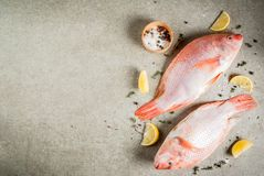 Fresh raw fish pink tilapia. With spices for cooking - lemon, salt, pepper, herbs, on gray stone table, copy space Royalty Free Stock Photos