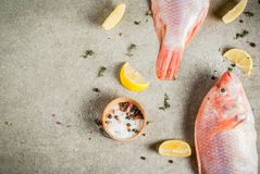 Fresh raw fish pink tilapia. With spices for cooking - lemon, salt, pepper, herbs, on gray stone table, copy space Stock Image