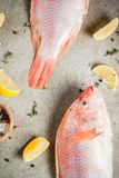 Fresh raw fish pink tilapia. With spices for cooking - lemon, salt, pepper, herbs, on gray stone table, copy space Royalty Free Stock Photo