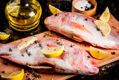 Fresh raw fish pink tilapia. With spices for cooking - lemon, salt, pepper, herbs, on  black rusty metal table, copy space Stock Photos