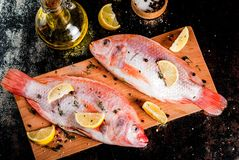 Fresh raw fish pink tilapia. With spices for cooking - lemon, salt, pepper, herbs, on  black rusty metal table, copy space Stock Image