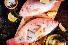 Fresh raw fish pink tilapia. With spices for cooking - lemon, salt, pepper, herbs, on  black rusty metal table, copy space top view Stock Image